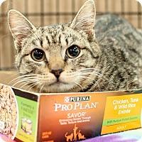 Adopt A Pet :: Dany - Gainesville, FL