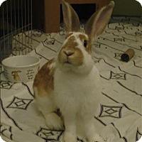 Adopt A Pet :: Spencer - Maple Ridge, BC