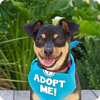 Adopt A Pet :: Beau Chi - Pacific Grove, CA