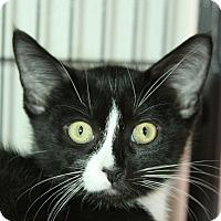 Adopt A Pet :: Jefferson - Sarasota, FL