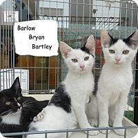 Adopt A Pet :: Barlow Bryan Bartley - Elyria, OH