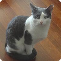 Adopt A Pet :: CHARMER CHAMPOLINO&Friends - New York, NY