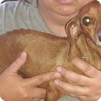 Adopt A Pet :: Jenny - Humble, TX