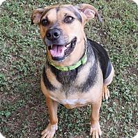 Adopt A Pet :: Mally - PORTLAND, ME