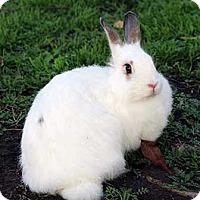 Adopt A Pet :: Peach - Tustin, CA