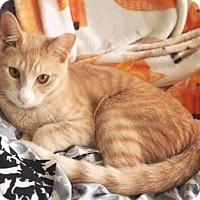Adopt A Pet :: Ricky - Brooklyn, NY