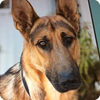 Adopt A Pet :: ANDY VON AUGSBURG - Los Angeles, CA