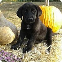 Adopt A Pet :: Jazzy - Attalla, AL