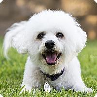 Adopt A Pet :: Stella - Placentia, CA
