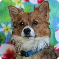 Adopt A Pet :: TEDDY - Red Bluff, CA