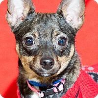 Adopt A Pet :: princess - Johnson City, TN