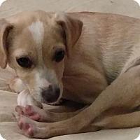 Adopt A Pet :: Poppie - San Diego, CA