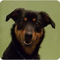 Adopt A Pet :: Lloyd - Schaumburg, IL