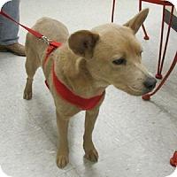 Adopt A Pet :: Oopsey Daizy - Gilbert, AZ