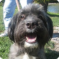 Adopt A Pet :: Chloe - Orange Park, FL