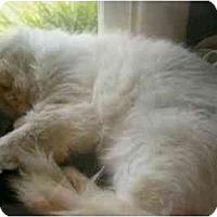 Adopt A Pet :: Julia Sponsor me :) - Keizer, OR