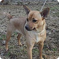Adopt A Pet :: Lola - Hollis, ME
