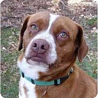 Adopt A Pet :: Boris - Mocksville, NC