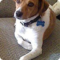 Adopt A Pet :: Dixie Ann - Sugar Land, TX