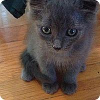 Adopt A Pet :: Misty - Lancaster, MA