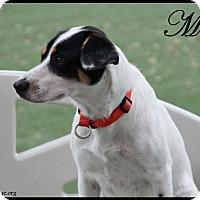 Adopt A Pet :: Molly - Rockwall, TX