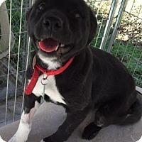 Adopt A Pet :: Annie - Edisto Island, SC