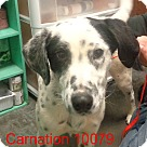 Adopt A Pet :: Carnation