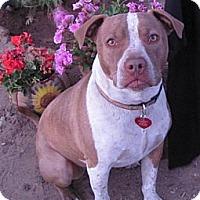 Adopt A Pet :: Johnny Depp - Toluca Lake, CA