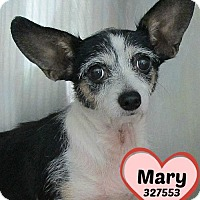 Adopt A Pet :: 327553 Mary - San Antonio, TX