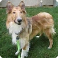 Adopt A Pet :: TUCKER - Dublin, OH