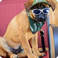 Adopt A Pet :: Frank the Tank - Baton Rouge, LA
