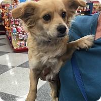 Adopt A Pet :: Cindy - Tucson, AZ