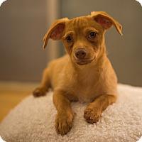 Adopt A Pet :: Curry - San Francisco, CA