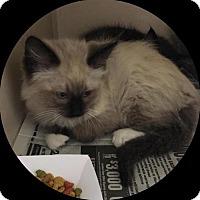 Adopt A Pet :: Kingston 1 - Austin, TX