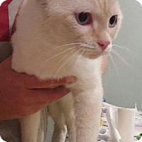 Adopt A Pet :: Butter Bean - Manhattan, KS