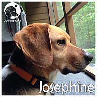 Adopt A Pet :: Josphine - Novi, MI