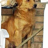 Adopt A Pet :: Nikko - BIRMINGHAM, AL