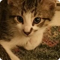 Adopt A Pet :: Capt. Jack - Garner, NC