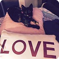 Adopt A Pet :: Fizzy - Orange, CA