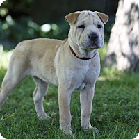 Adopt A Pet :: VENTANA - Ile-Perrot, QC