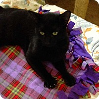 Adopt A Pet :: Luther - Lombard, IL