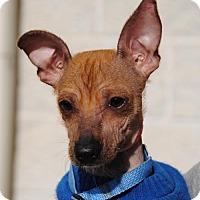 Adopt A Pet :: Mulder - Philadelphia, PA