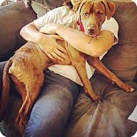 Adopt A Pet :: Vita Mae - Austin, TX