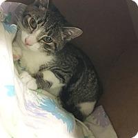 Adopt A Pet :: Cecil - Hudson, NY