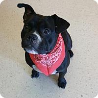 Adopt A Pet :: Aliza - Janesville, WI