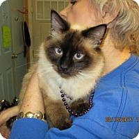 Adopt A Pet :: Mocha - Picayune, MS