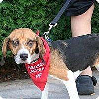 Adopt A Pet :: Sonnet Hughes - Waldorf, MD