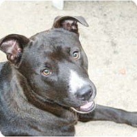 Adopt A Pet :: *Rocket - Winder, GA
