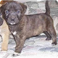 Adopt A Pet :: Snick - Chandler, IN