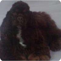 Adopt A Pet :: Tanner - Tacoma, WA